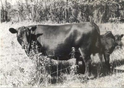 china-westover-farm-1974