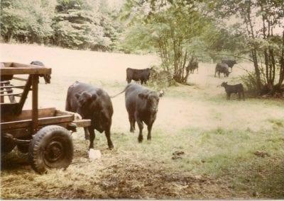 westover-farm-1975